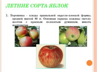 ЛЕТНИЕ СОРТА ЯБЛОК 1. Боровинка - плоды правильной округло-плоской формы, сре