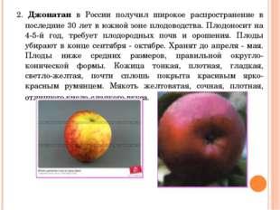 2. Джонатан в России получил широкое распространение в последние 30 лет в южн