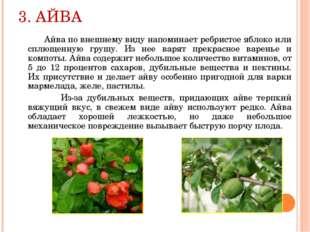 3. АЙВА Айва по внешнему виду напоминает ребристое яблоко или сплющенную груш