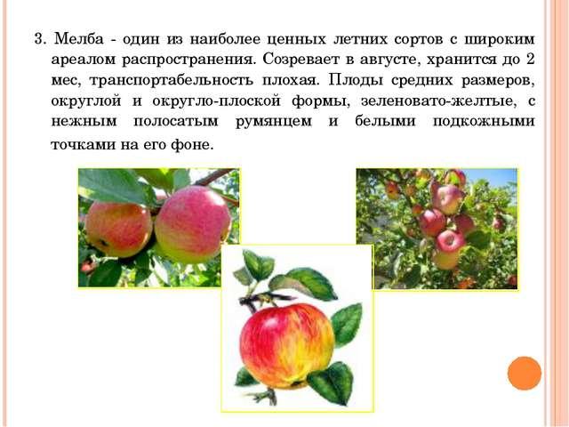 3. Мелба - один из наиболее ценных летних сортов с широким ареалом распростра...