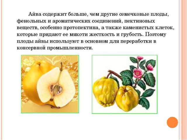 Айва содержит больше, чем другие семечковые плоды, фенольных и ароматических...