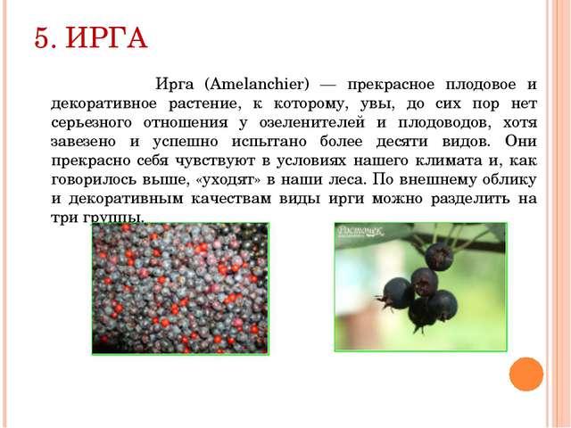 5. ИРГА Ирга (Amelanchier) — прекрасное плодовое и декоративное растение, к к...