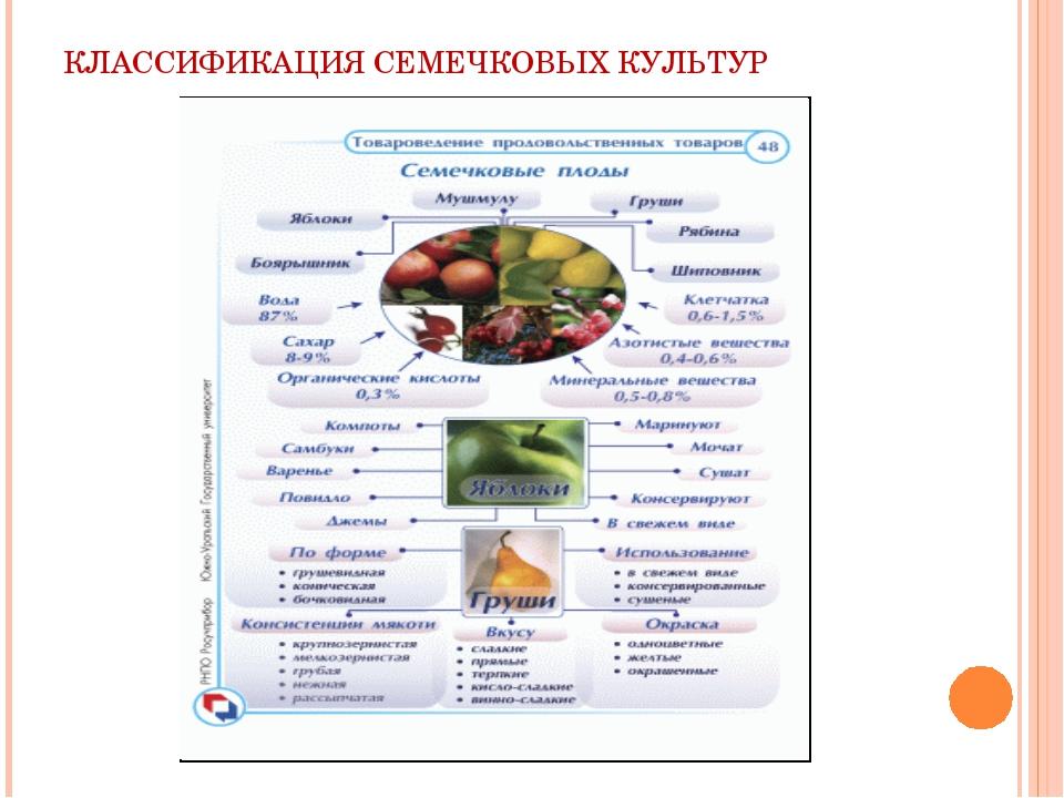 КЛАССИФИКАЦИЯ СЕМЕЧКОВЫХ КУЛЬТУР
