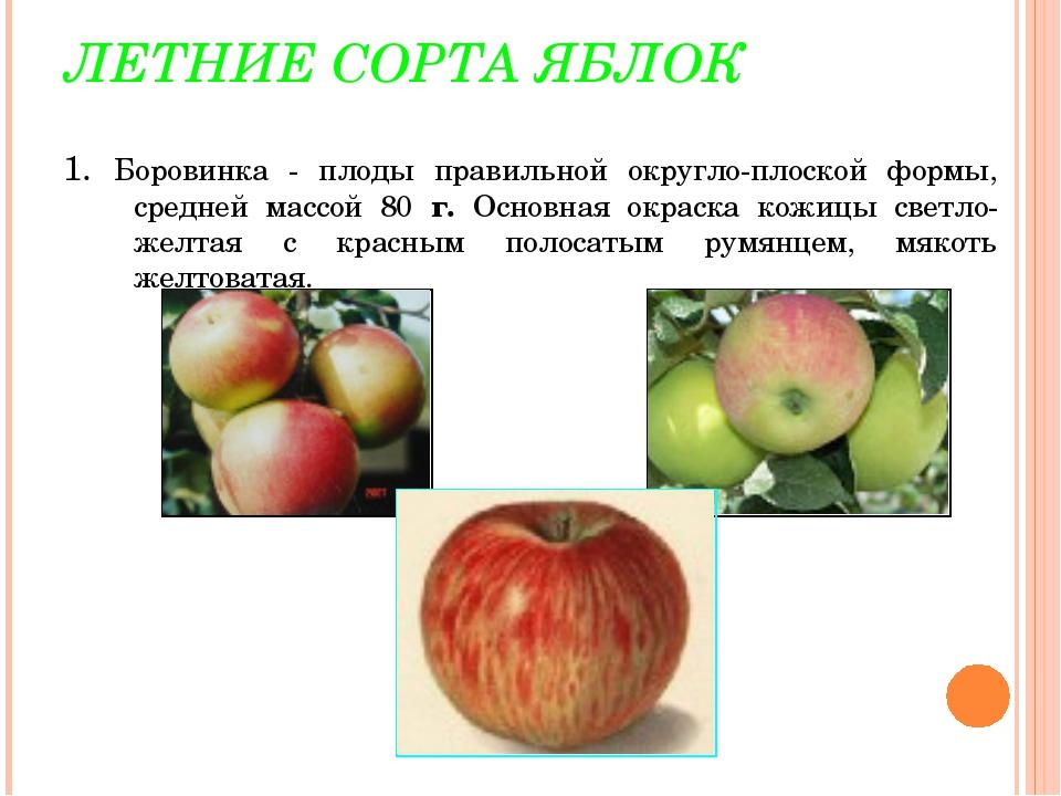 ЛЕТНИЕ СОРТА ЯБЛОК 1. Боровинка - плоды правильной округло-плоской формы, сре...