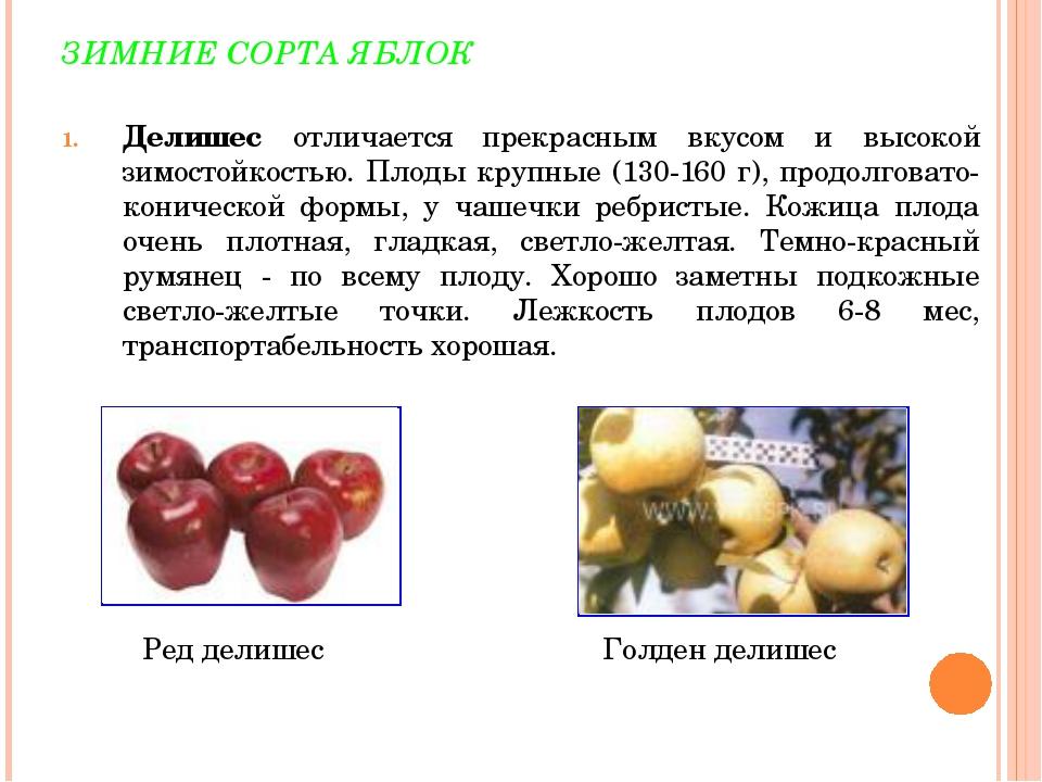 ЗИМНИЕ СОРТА ЯБЛОК Делишес отличается прекрасным вкусом и высокой зимостойкос...