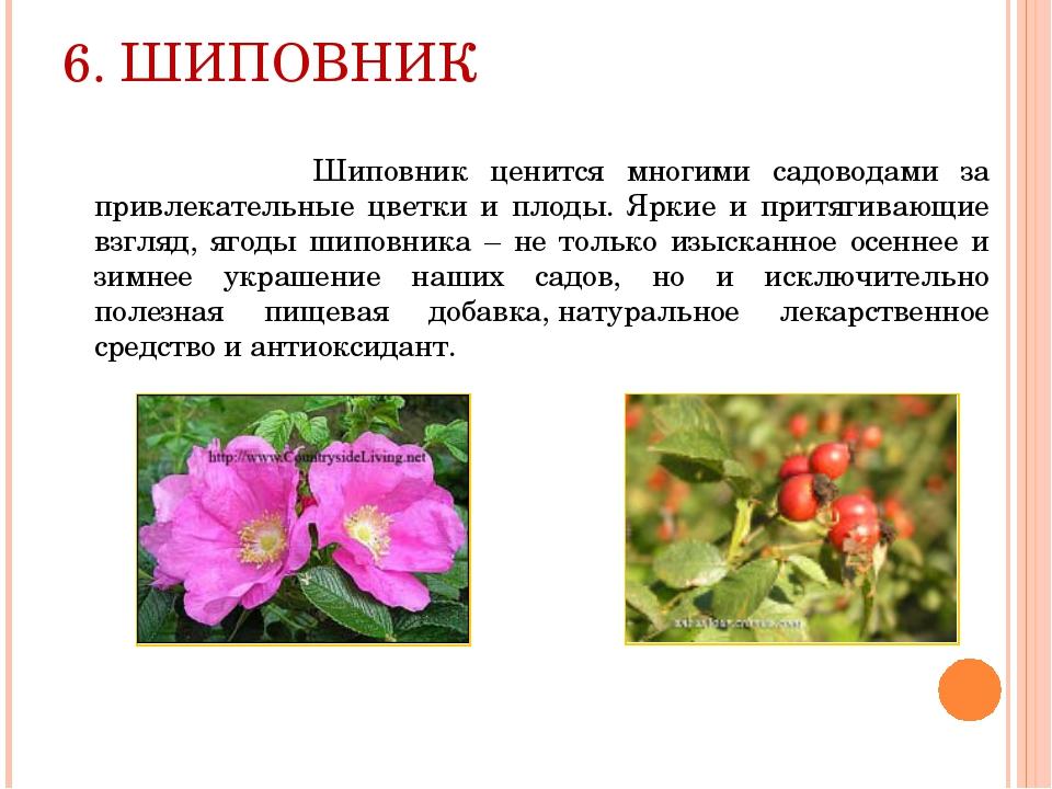 6. ШИПОВНИК Шиповник ценится многими садоводами за привлекательные цветки и п...
