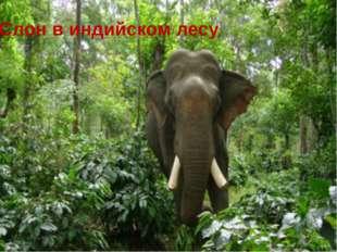 Слон в индийском лесу