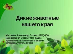 Дикие животные нашего края Митянин Александр, 6 класс, МС(к)ОУ «Брюховская СК