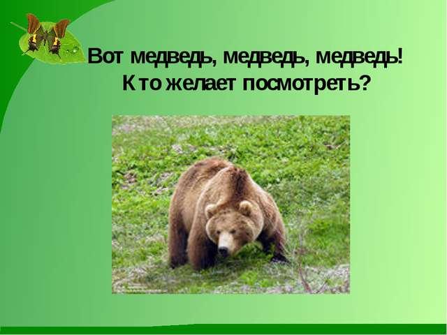 Вот медведь, медведь, медведь! Кто желает посмотреть?