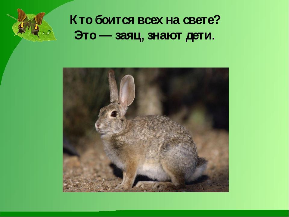 Кто боится всех на свете? Это — заяц, знают дети.