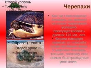Черепахи Как ни тяжеловесен панцирь, но именно он помог черепахам успешно пр