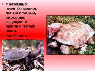 У наземных черепах панцирь легкий и тонкий, он хорошо защищает от врагов и по