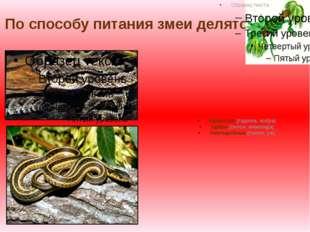 По способу питания змеи делятся: Ядовитые (гадюка, кобра) Удавы (питон, анако