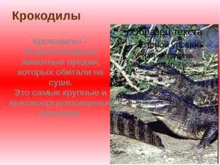 Крокодилы Крокодилы – вторичноводные животные предки, которых обитали на суше