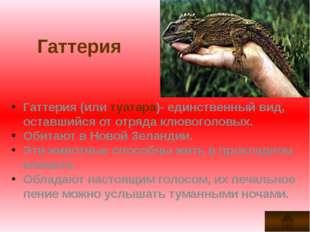 Гаттерия Гаттерия (или туатара)- единственный вид, оставшийся от отряда клюво