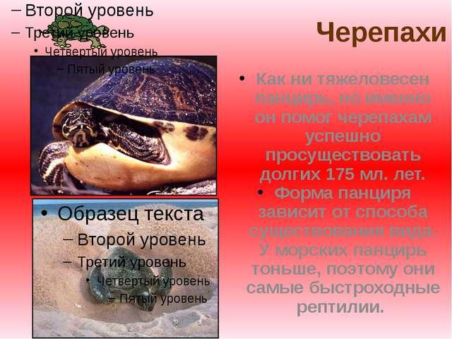 Черепахи Как ни тяжеловесен панцирь, но именно он помог черепахам успешно пр...