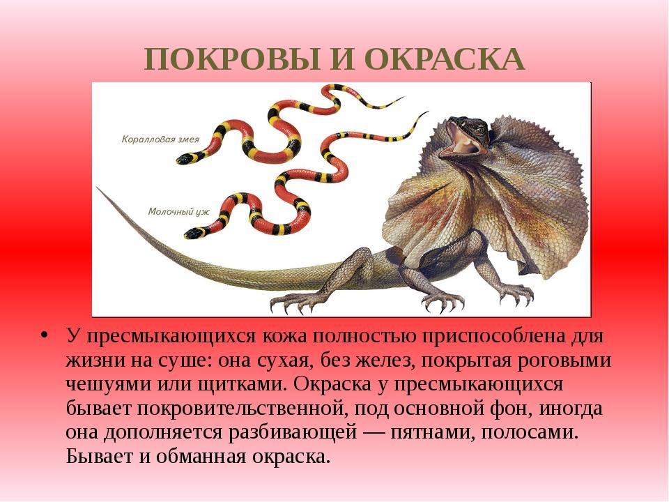 ПОКРОВЫ И ОКРАСКА У пресмыкающихся кожа полностью приспособлена для жизни на...