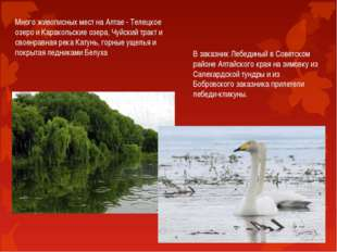 Много живописных мест на Алтае - Телецкое озеро и Каракольские озера, Чуйский