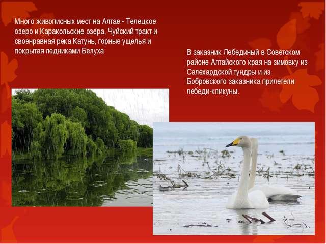 Много живописных мест на Алтае - Телецкое озеро и Каракольские озера, Чуйский...