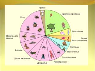 Общая характеристика 1,5 млн. видов Двусторонняя симметрия тела Обитают во вс