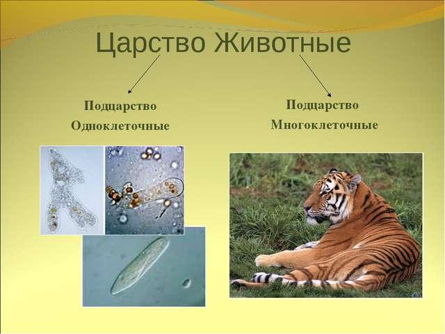 Царство Животные Подцарство Одноклеточные Подцарство Многоклеточные