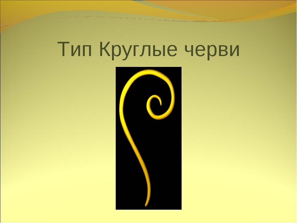 Тип Круглые черви