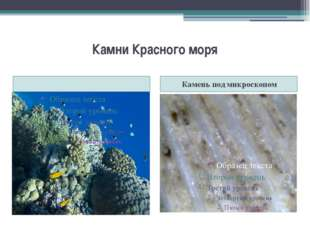 Камни Красного моря Камень под микроскопом