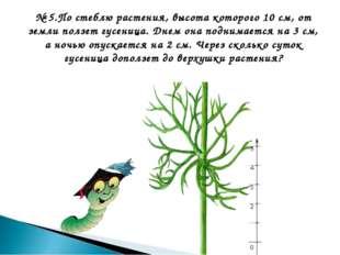№ 5.По стеблю растения, высота которого 10 см, от земли ползет гусеница. Днем
