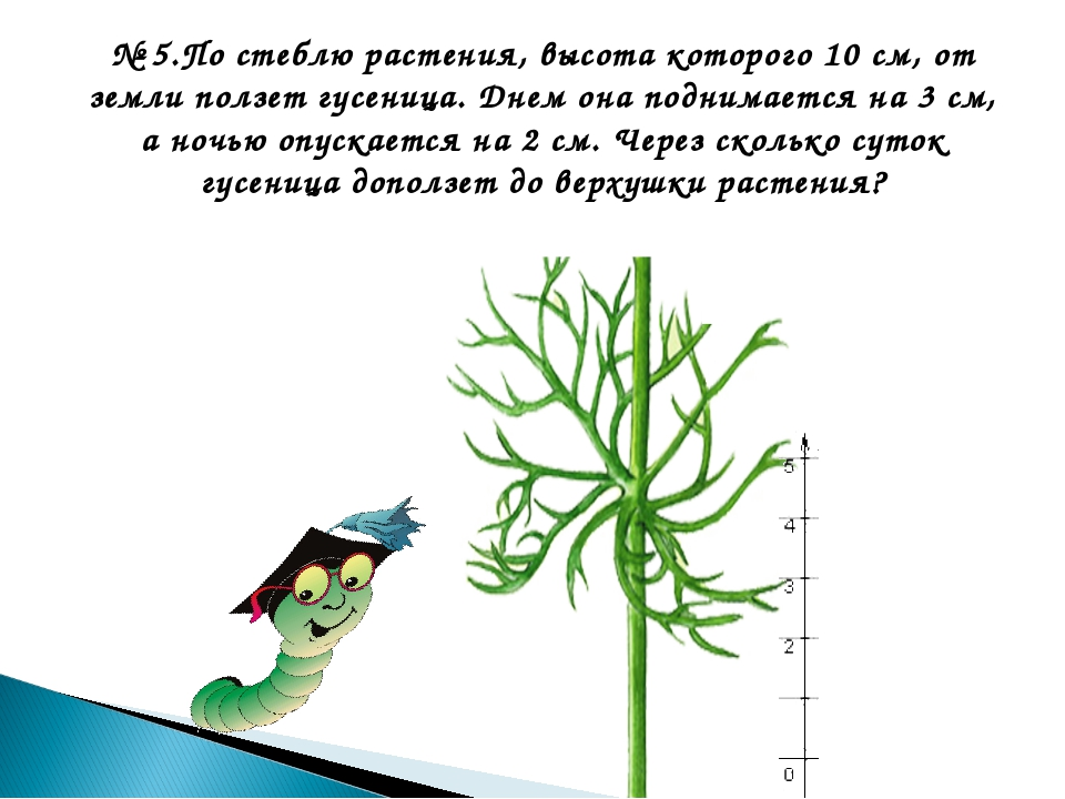 № 5.По стеблю растения, высота которого 10 см, от земли ползет гусеница. Днем...