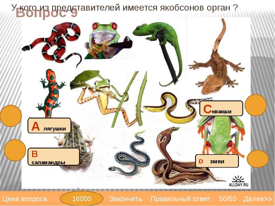 Вопрос 11 4 камерное сердце имеют: С крокодилы В черепахи А саламандры D трит...