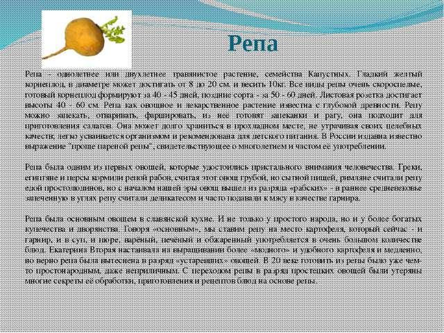 Репа Репа - однолетнее или двухлетнее травянистое растение, семейства Капустн...