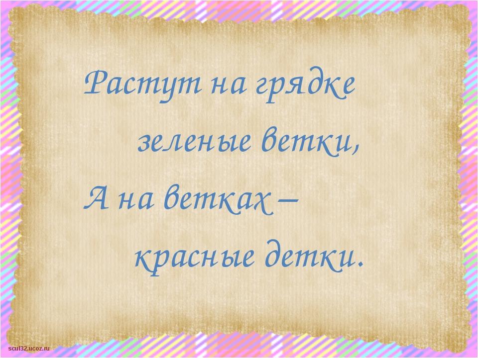 Растут на грядке зеленые ветки, А на ветках – красные детки. scul32.ucoz.ru