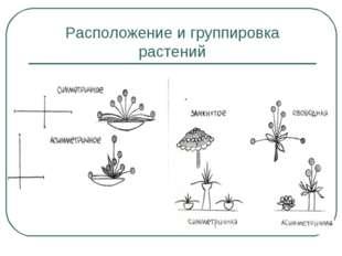 Расположение и группировка растений