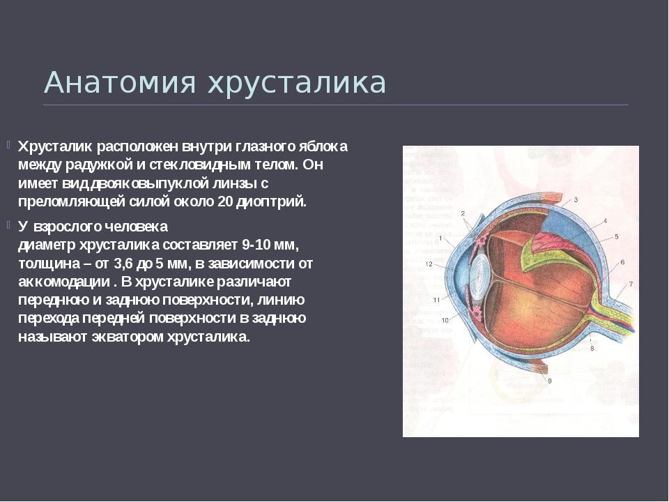 Анатомия хрусталика Хрусталикрасположен внутриглазногояблока между радужко...