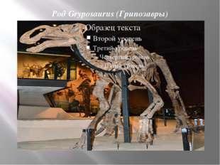 Род Gryposaurus (Грипозавры)