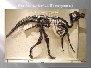 Род Prosaurolophus (Прозауролоф)