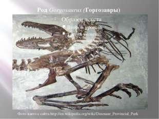 Род Gorgosaurus (Горгозавры) Фото взято с сайта http://en.wikipedia.org/wiki/