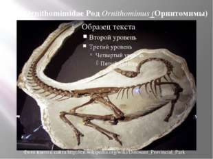 Сем. Ornithomimidae Род Ornithomimus (Орнитомимы) Фото взято с сайта http://e
