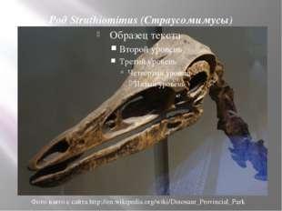 Род Struthiomimus (Страусомимусы) Фото взято с сайта http://en.wikipedia.org/