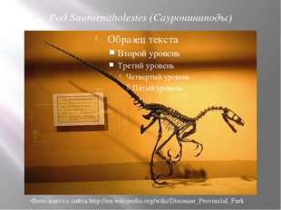 Род Saurornitholestes (Саурониниподы) Фото взято с сайта http://en.wikipedia.