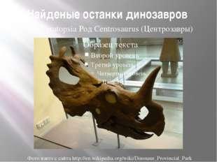 Найденые останки динозавров Сем.Ceratopsia Род Centrosaurus (Центрозавры) Фот