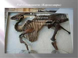 Род Coronosaurus (Коронозавры)