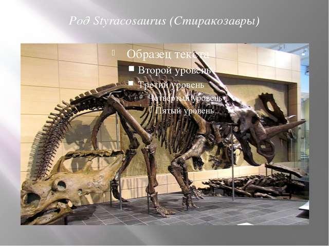 Род Styracosaurus (Стиракозавры)