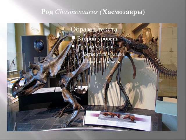 Род Chasmosaurus (Хасмозавры)
