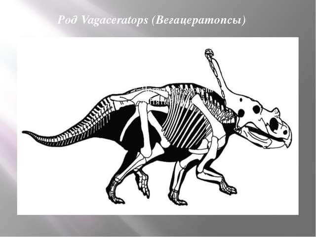 Род Vagaceratops (Вегацератопсы)