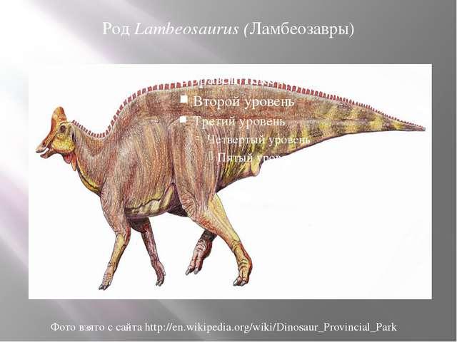 Род Lambeosaurus (Ламбеозавры) Фото взято с сайта http://en.wikipedia.org/wik...