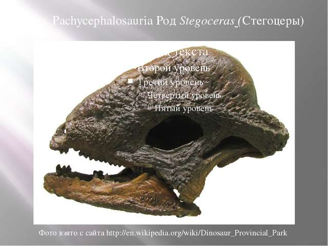 Сем. Pachycephalosauria Род Stegoceras (Стегоцеры) Фото взято с сайта http://...