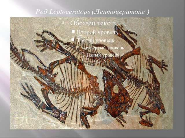 Род Leptoceratops (Лептоцератопс )