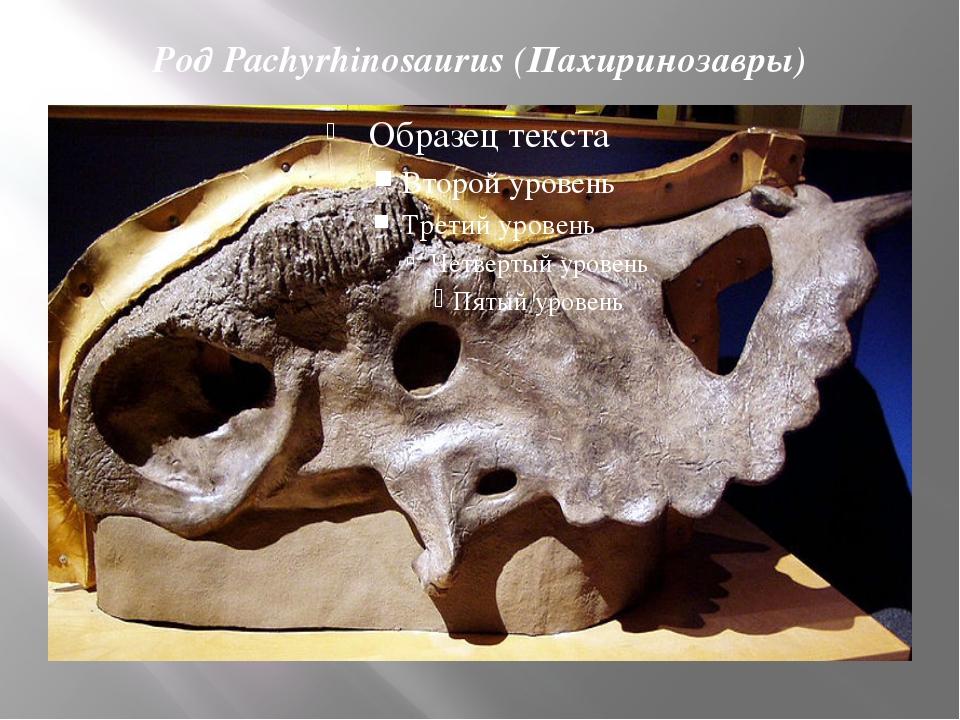 Род Pachyrhinosaurus (Пахиринозавры)