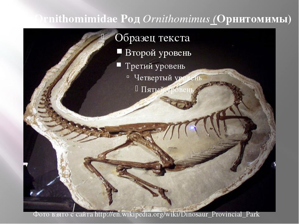 Сем. Ornithomimidae Род Ornithomimus (Орнитомимы) Фото взято с сайта http://e...